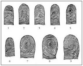 Purkinje's 9 fingerprint patterns.