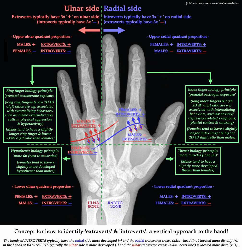 Extraversion Hand Chart: 6 vertical hand factors!