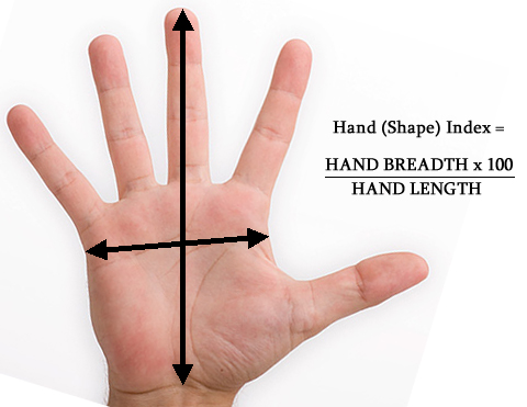 Low hand index: palm breadth vs. hand length is low.