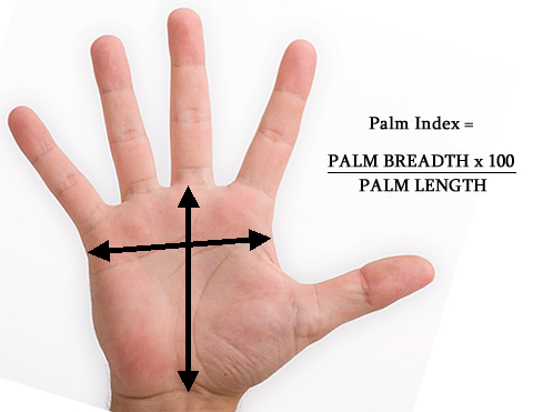 Palm (shape) index: how to measure the palm shape via palm breadth & palm length.