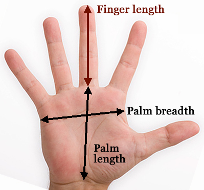 Finger length measurement.