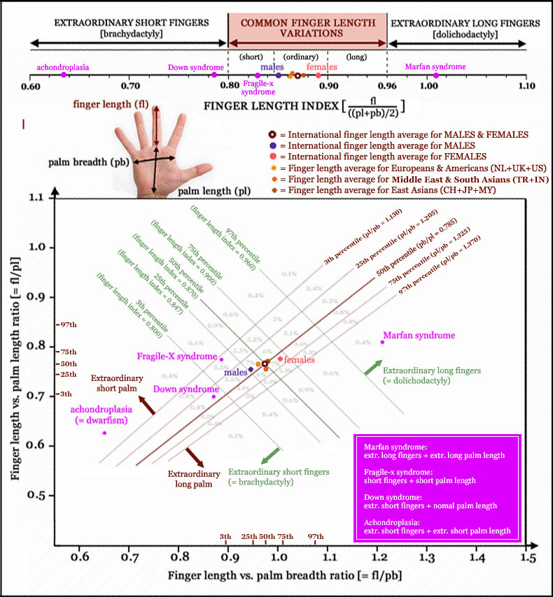 Hand shape gives a clue about genes, chromosomes & DNA!  Finger-length-variations-palm-length