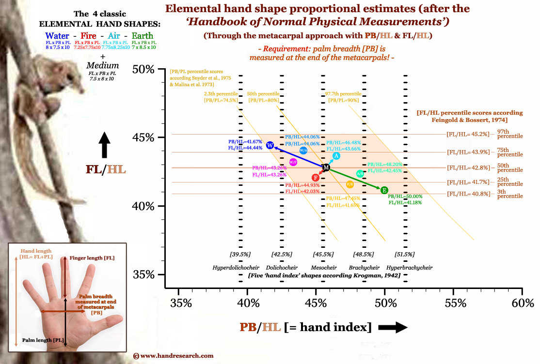 Elemental hand shape assessment through the metacarpal approach.