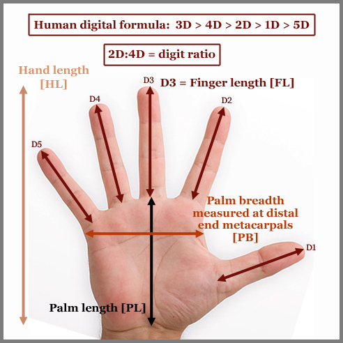Hand index correlates with<BR> genetic variation & genetic distance!