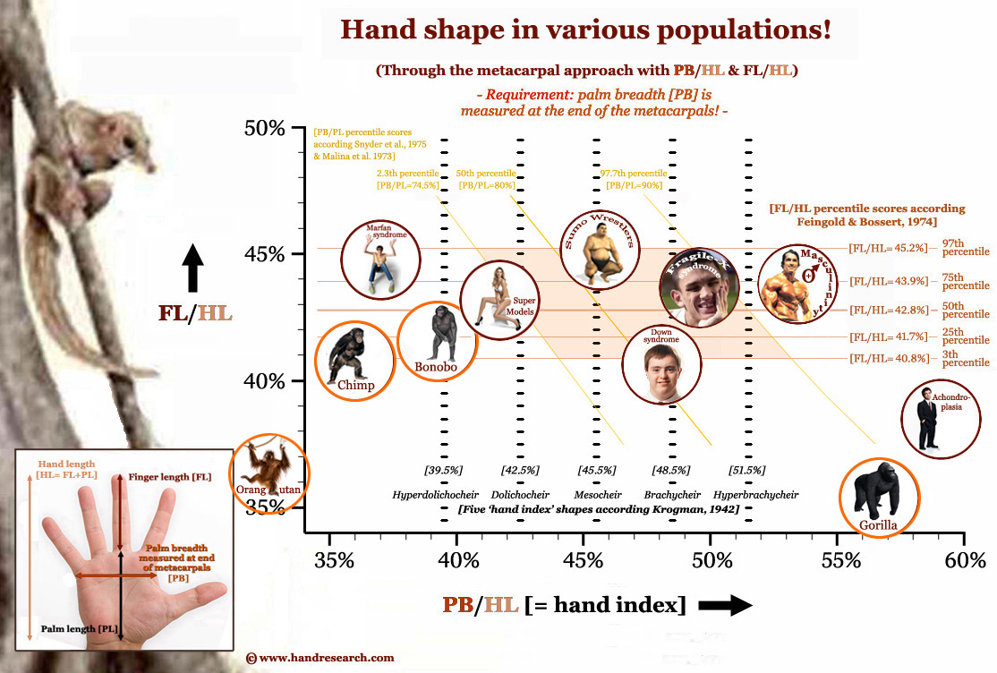 Hand shape in various populations.