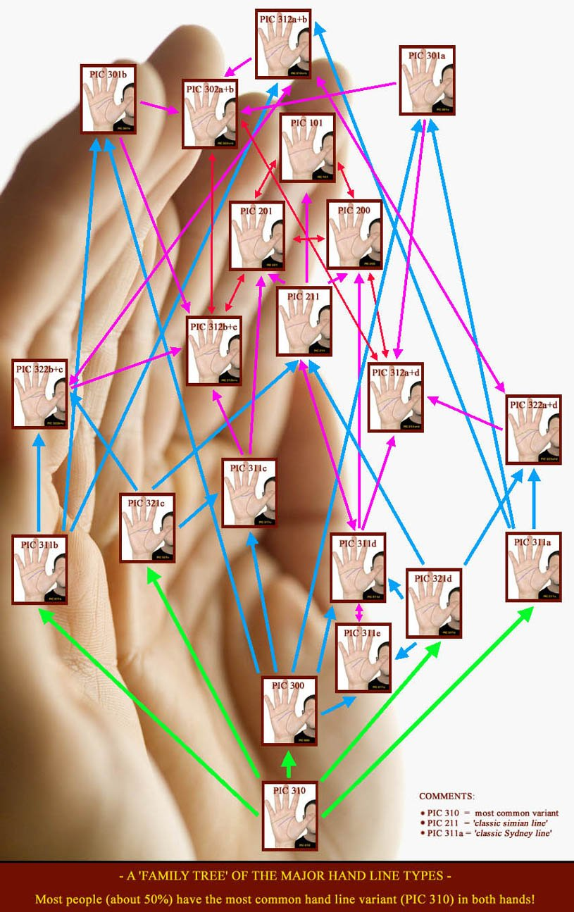 A family tree of the two major transversal hand lines.