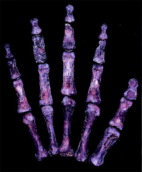 Finger ratios point out: the Neanderthal life was dominated by competition & promiscuity!