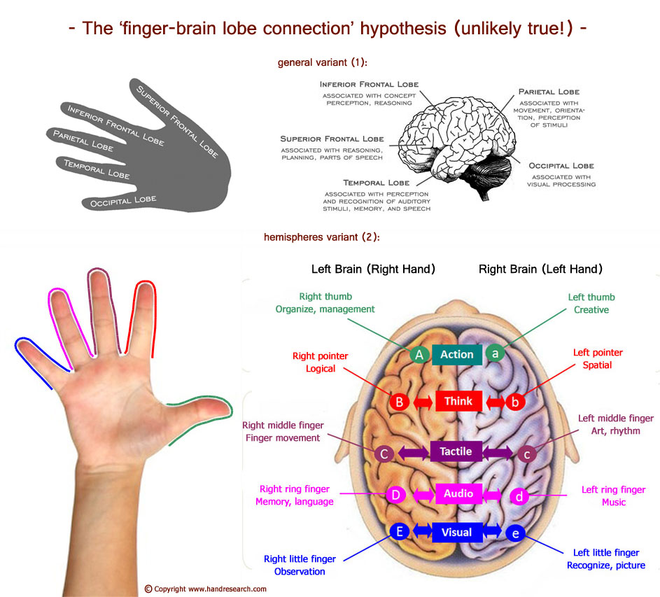 The finger-brain lobe hypothesis according Mary Lai.