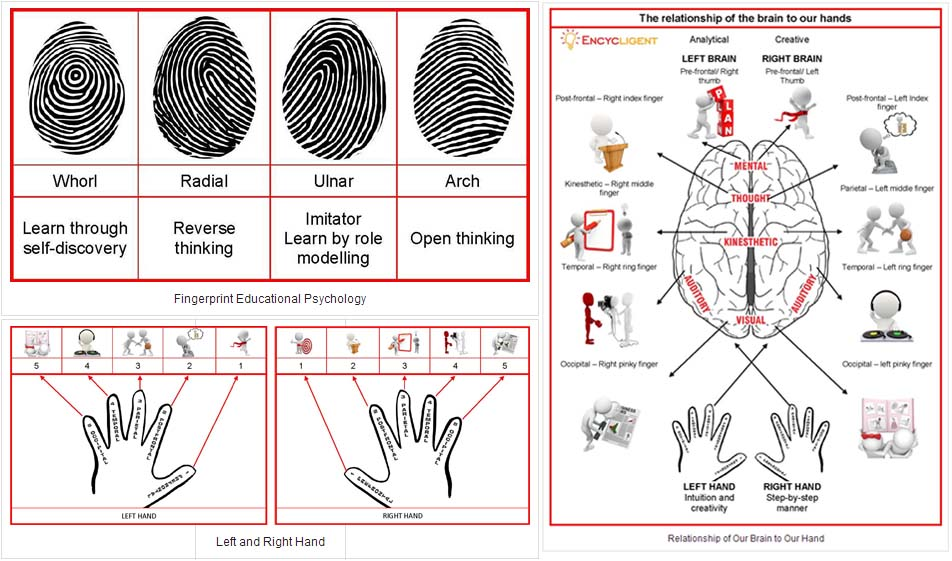 The fingerprint pattern predicts behavior hypothesis according Professor Lin.