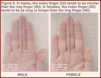 Talk to the hand: who are today's finger measurement celebrities?