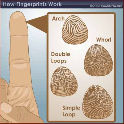 What are the basic characteristics of fingerprints?