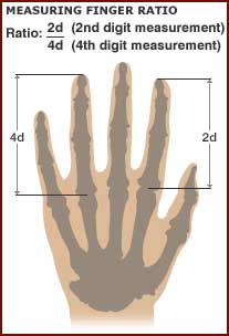 measuring digit ratio or finger ratio