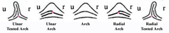 Advanced arch fingerprint pattern types.