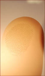 Fingerprint ridges