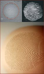 Fingerprints filter vibrations & touch.