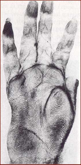 Primate hands: the hand of a macaque!