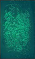 What fingerprints reveal: identiy, drugs & lifestyle