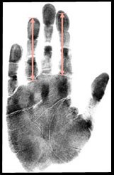 Human digital formula: index finger and ring finger have approximately the same length!