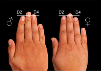 Hand news: 2D:4D digit ratio.