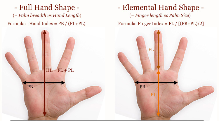 Elemental hand shape assessment 2.0: finger length vs. palm size! Full-hand-shape-vs-elemental-hand-shape