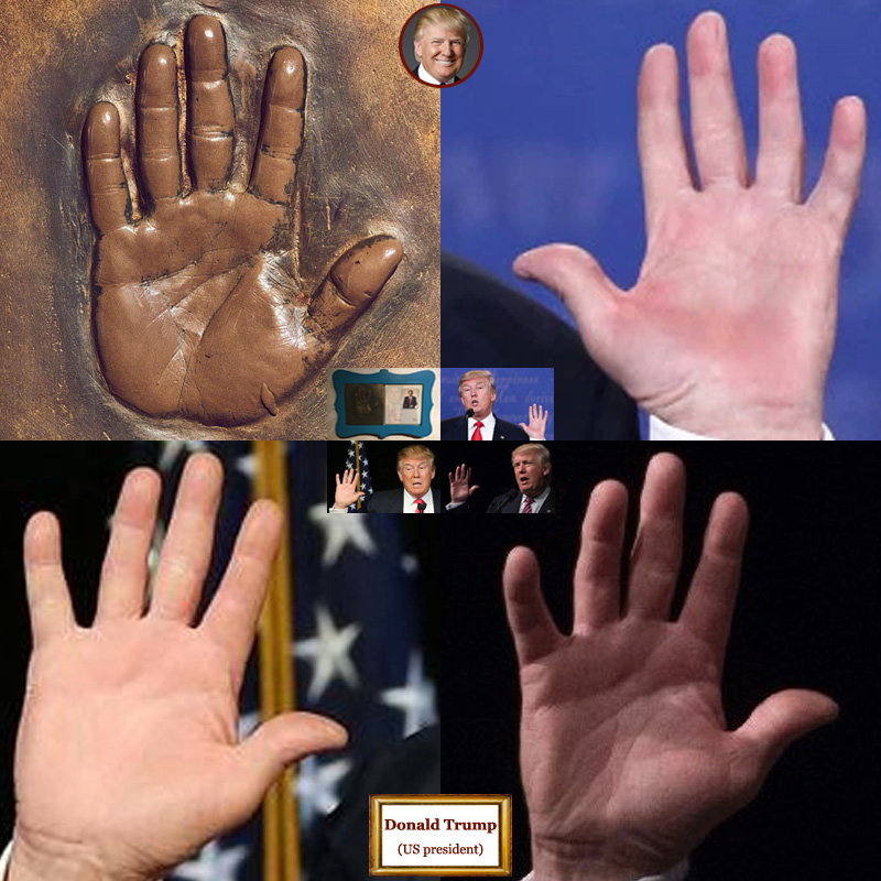 The hands of US president Donald Trump: photo impressions + hand print.